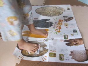 動物の足ポスター