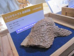 トリケラトプス 皮膚 福岡市科学館