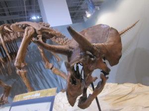 福岡市科学館 恐竜 骨