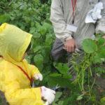 ふくおか農林漁業体験ツアー「枝豆収穫と味噌作り体験」に参加しました!